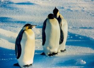Antarctic6