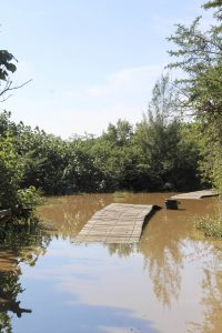 Estuary high levels on May 17