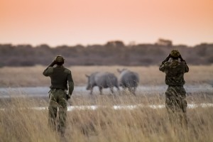 Rhino guardians - pic by Stew Nolan