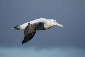 Pic courtesy of Bronwyn Maree/BirdLife South Africa